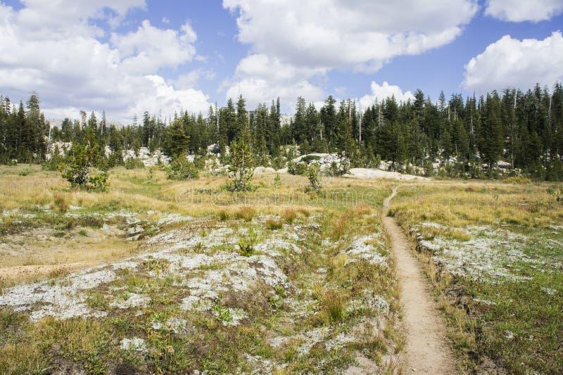 Título de la pista de senderismo en un bosque imagenes de archivo