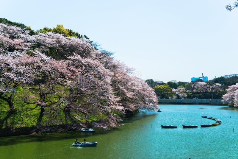 TÓQUIO - 7 de abril pessoa que comemora a flor de cerejeira em Chidorika-Fuji no Tóquio o 7 de abril de 2014 a estação da flor de imagem de stock royalty free