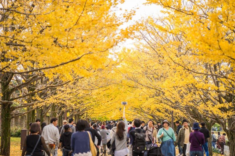 Tóquio, Japão - 20 de novembro de 2016: O outono é o período máximo para o trav foto de stock