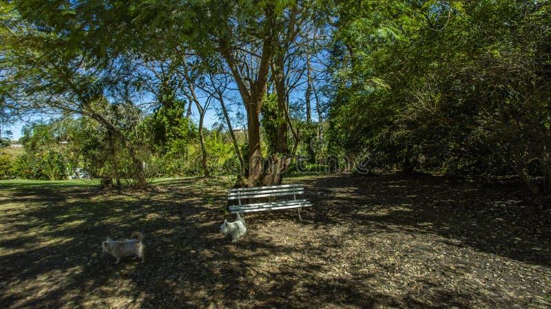 Töm bänken under träd Bra väder i morgon med träd royaltyfri fotografi