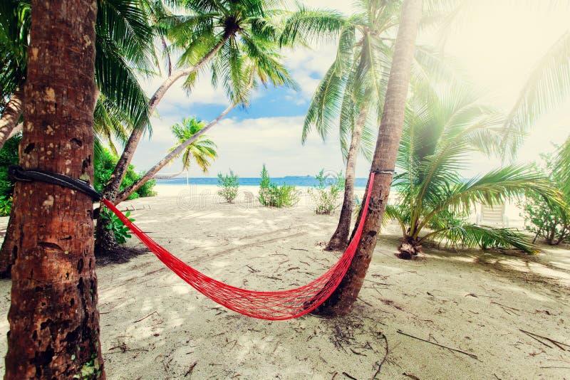 Töm den netto hängmattan på den tropiska strandsemesterorten fotografering för bildbyråer
