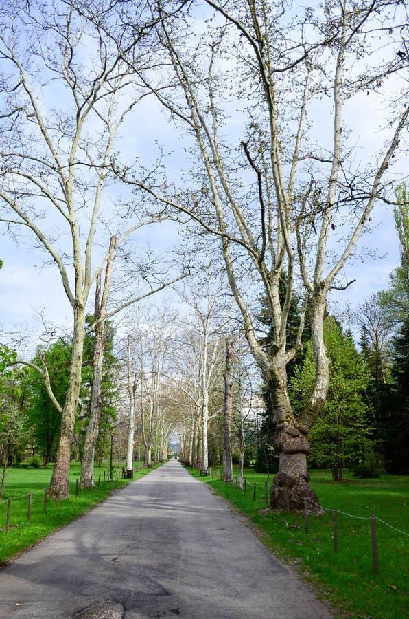 Töm trädgården royaltyfri fotografi