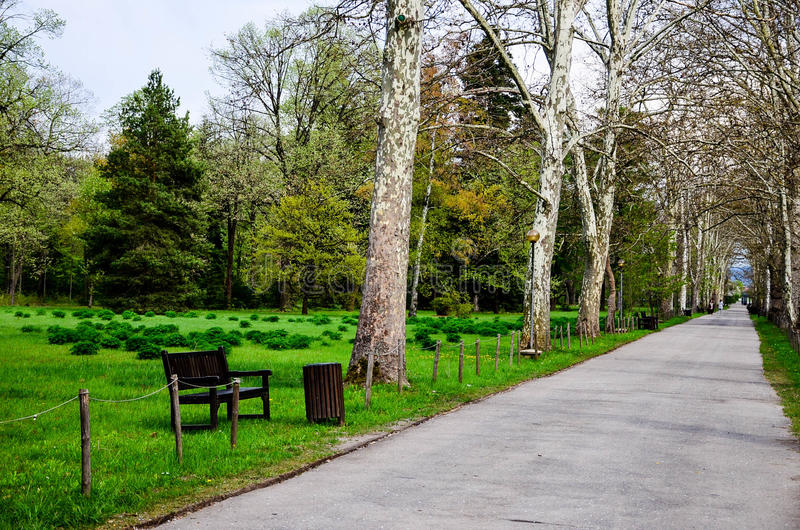 Töm trädgården royaltyfria foton