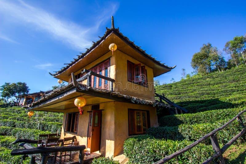 Tönerne Gebäude und U-lange Teeplantagen an thailändischem Dorf Verbot Rak, nahe Thailändisch-Myanmar-Grenze, Mae Hong Son-Provin stockfotos
