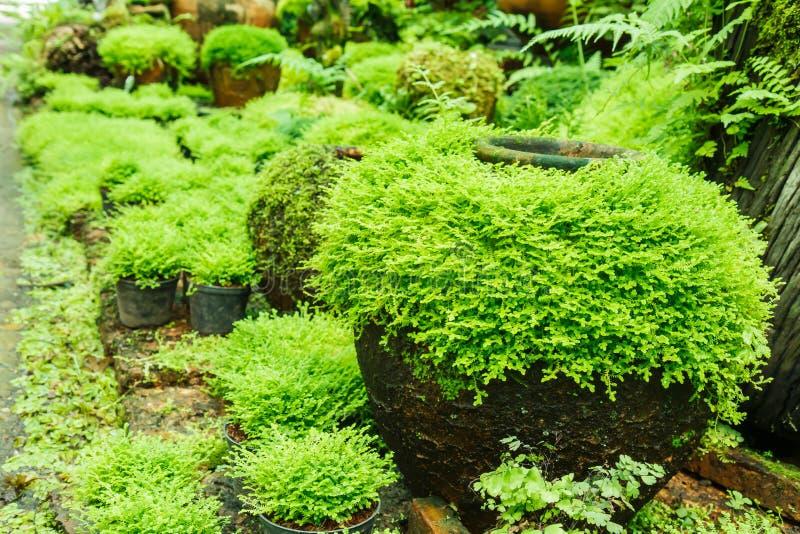 Töpfe im Garten mit Moos lizenzfreie stockfotografie