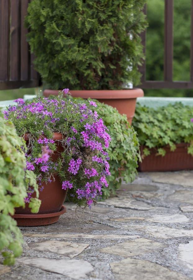 Töpfe mit Büschen von blühenden Pflanzen stockfotos