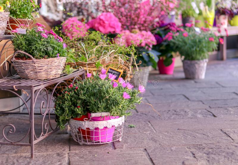 Töpfe mit blühenden rosa Blumen für Verkauf außerhalb des Blumenladens Der Gartenspeichereingang, der mit rustikaler Art verziert lizenzfreies stockfoto