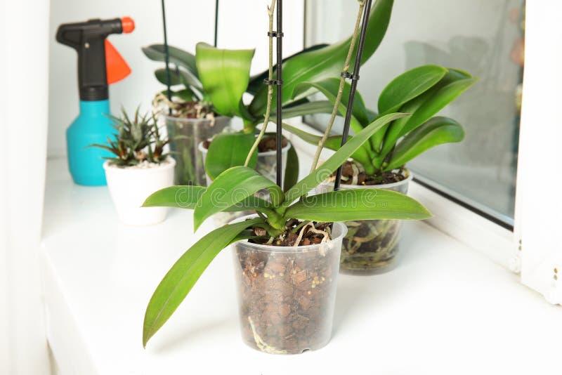 Töpfe mit Orchideenanlagen lizenzfreie stockfotografie
