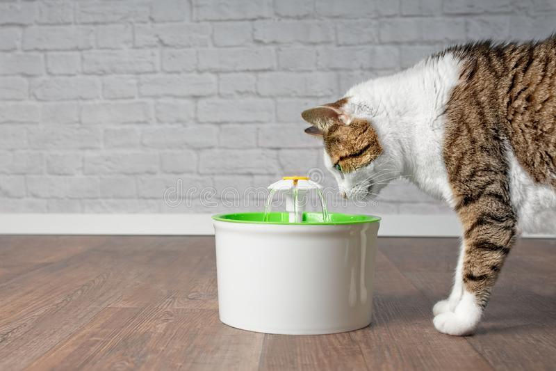 Törstigt dricksvatten för strimmig kattkatt från en dricka springbrunn för husdjur fotografering för bildbyråer