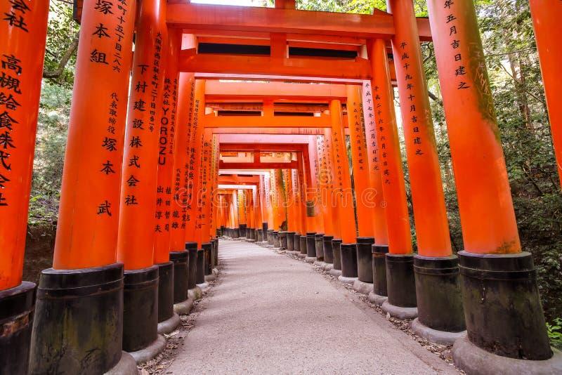 Túneis alaranjados das portas de Torii no santuário de Fushimi Inari-taisha com luz solar da manhã na mola foto de stock