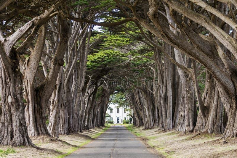 Túnel da árvore de Cypress em mais de luzes distribuídas fotos de stock