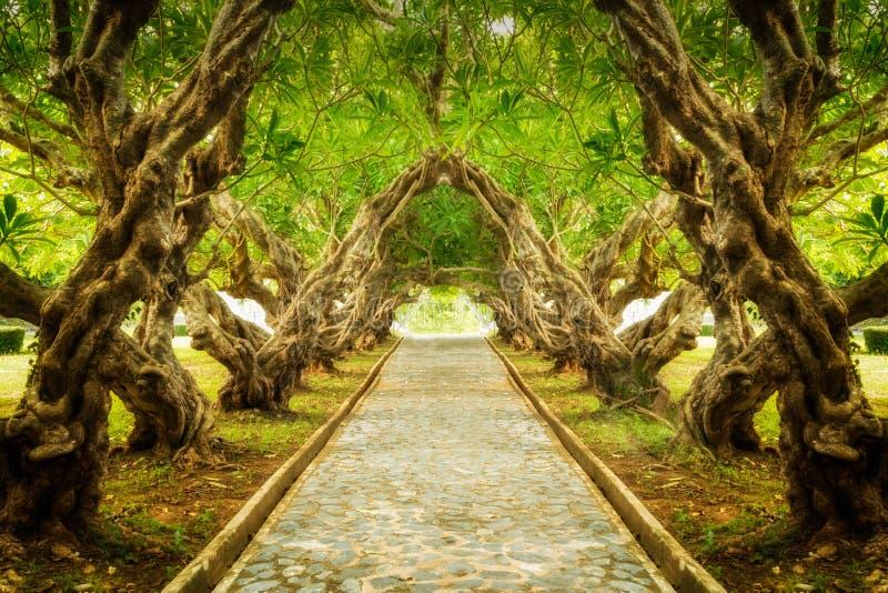Túnel da árvore do Plumeria imagens de stock royalty free