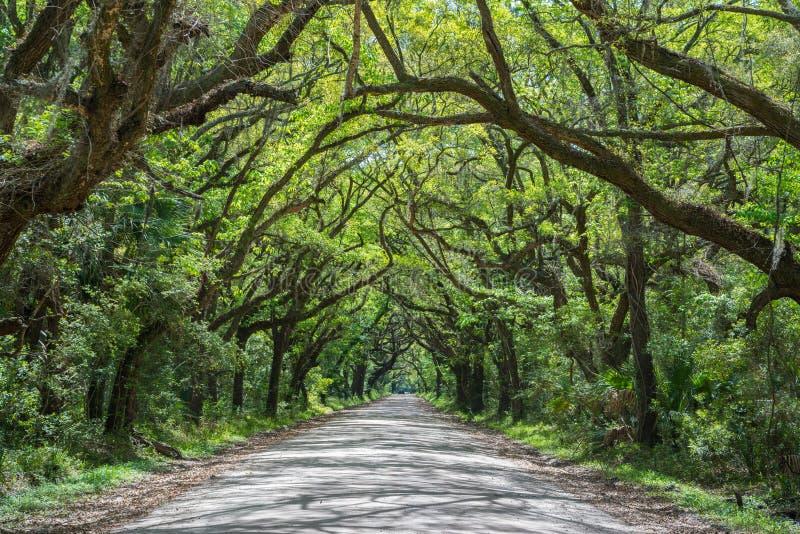 Túnel das árvores na estrada da baía da Botânica imagem de stock royalty free