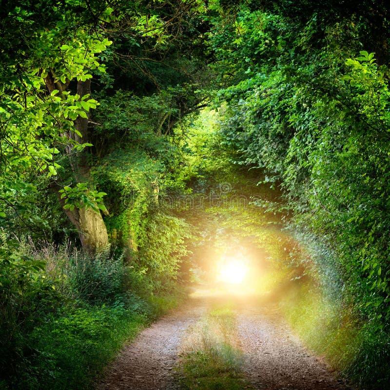 Túnel das árvores que conduzem para iluminar-se imagem de stock royalty free