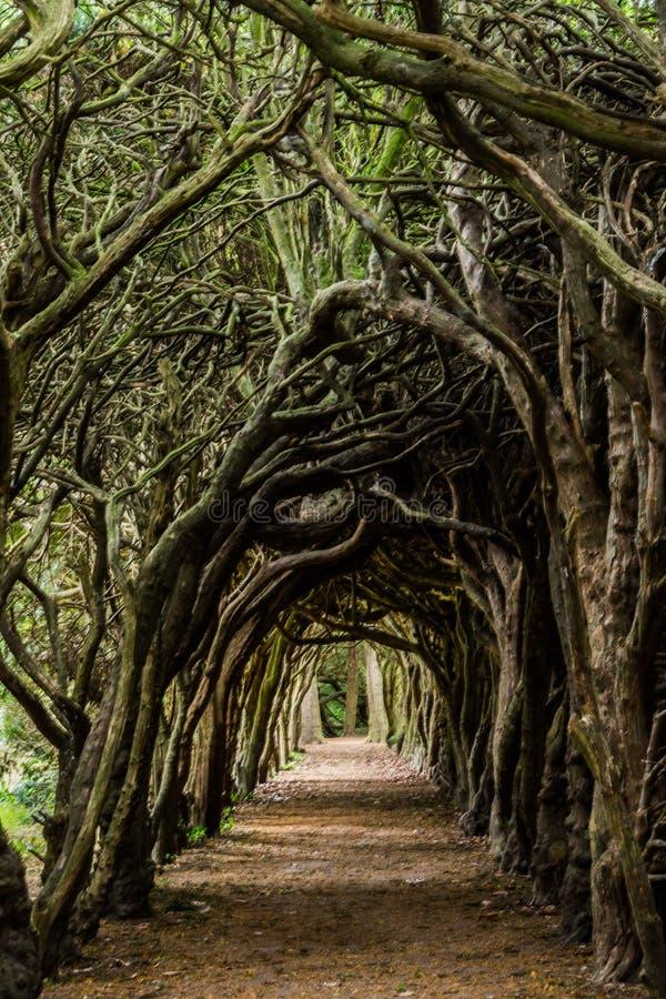Túnel del árbol fotografía de archivo