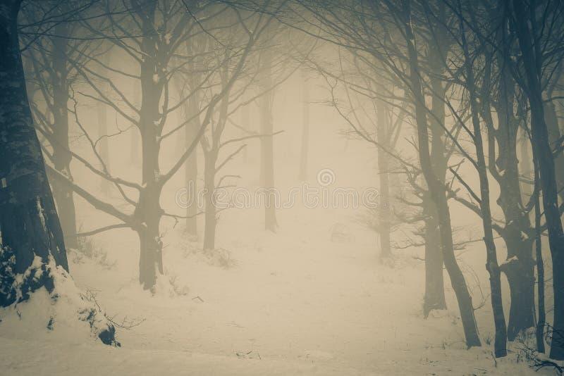Túnel del miedo en el bosque salvaje imagenes de archivo