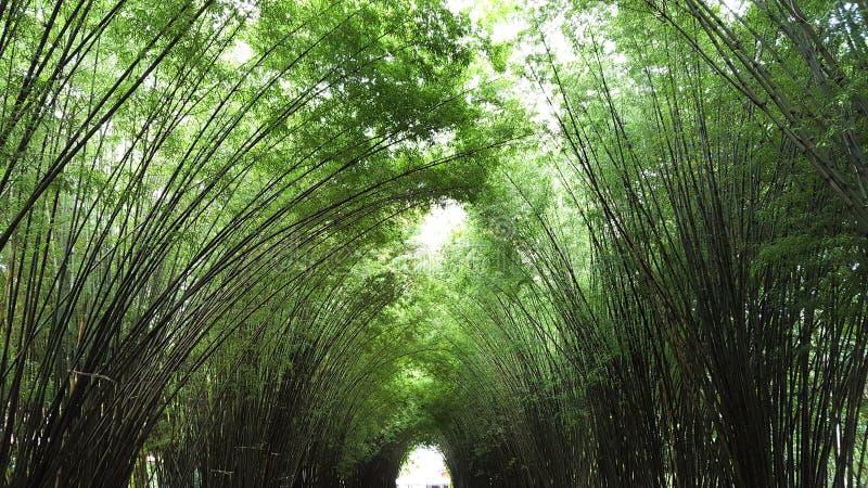 túnel do ฺBamboo fotos de stock