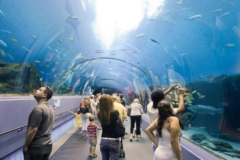 Túnel do aquário de Atlanta imagem de stock