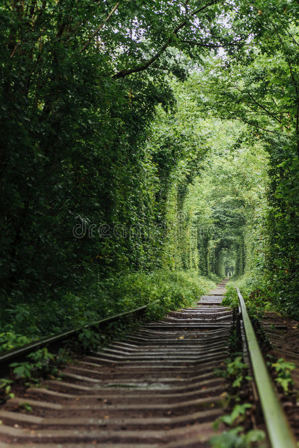 Túnel natural del amor que emerge de los árboles fotografía de archivo