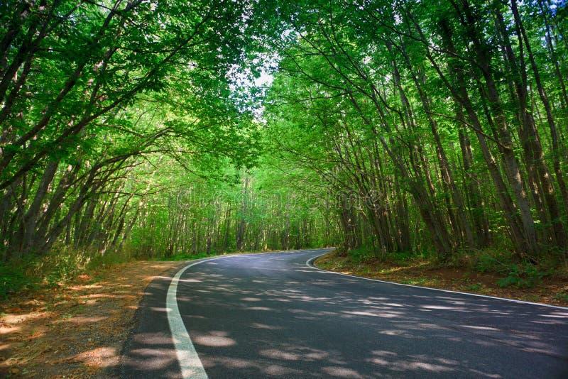 Túnel verde fotografía de archivo libre de regalías