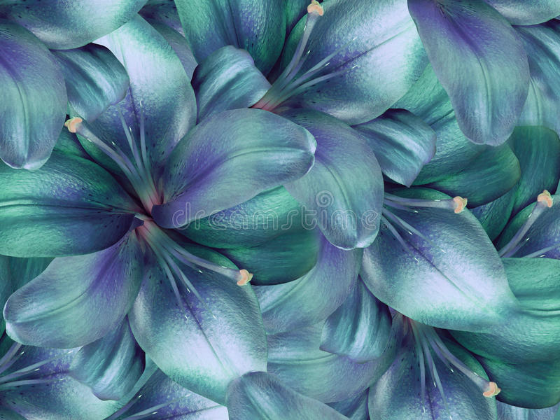 Türkis-blaue Blumen Der Lilie Heller Türkishintergrund Blumencollage ...