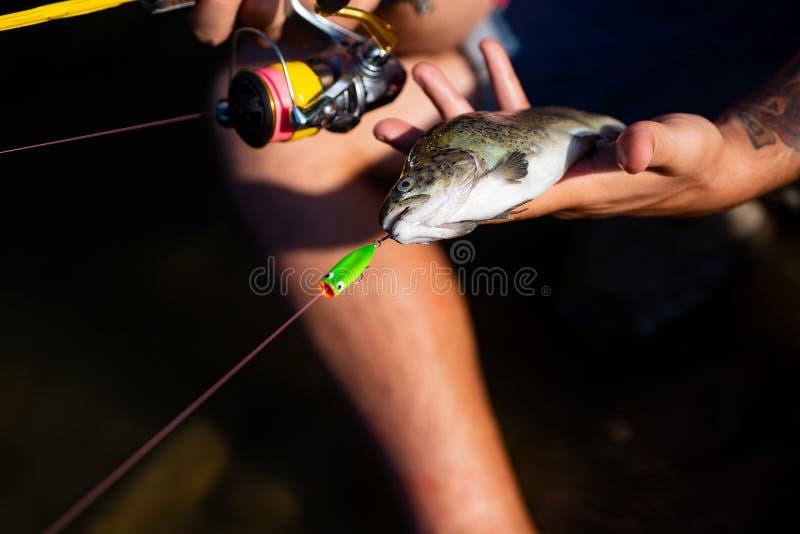 Tęcza pstrąg na haczyku Rybaka i trofeum pstrąg pstr?g ryby pokus? Połów zostać popularnym rekreacyjnym aktywnością obraz stock