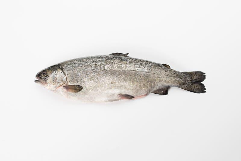 Tęcza pstrąg patroszyjący Obrana ryba na białym tle fotografia stock