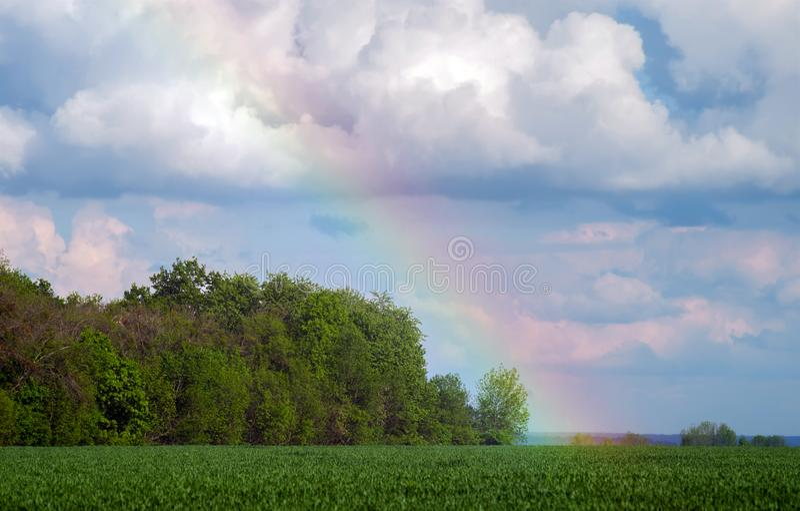 Tęcza w niebie nad gaj i pszeniczny pole z młodymi uprawami zdjęcia royalty free