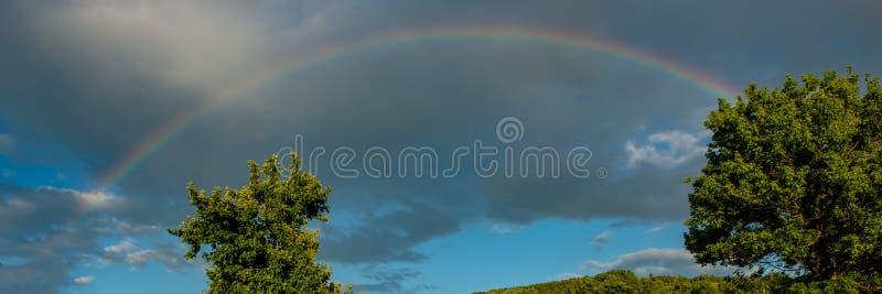 Tęcze i treetops przeciw tłu podeszczowe chmury, słoneczny dzień Sieć sztandar zdjęcia royalty free