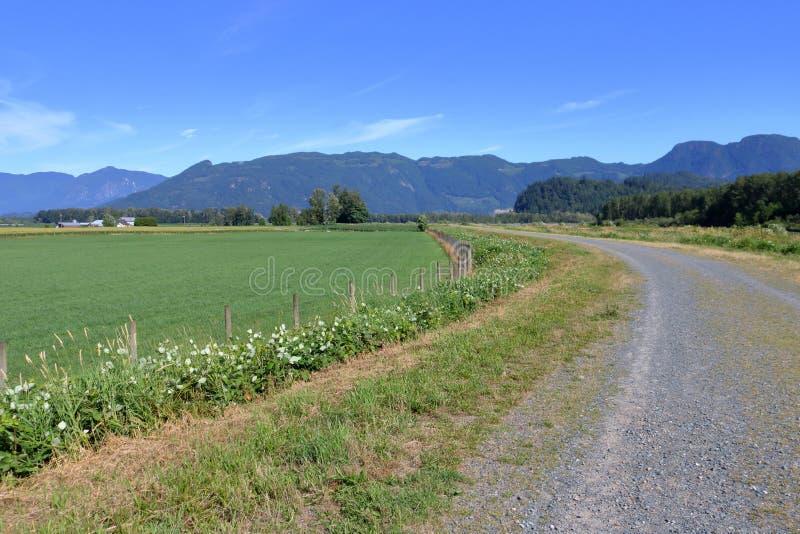Tęsk i Meandrujący Wiejską Rolniczą drogę zdjęcie royalty free