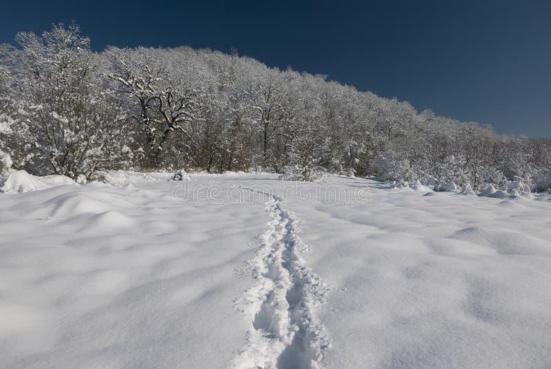 tła śnieżna śladów zima zdjęcie stock
