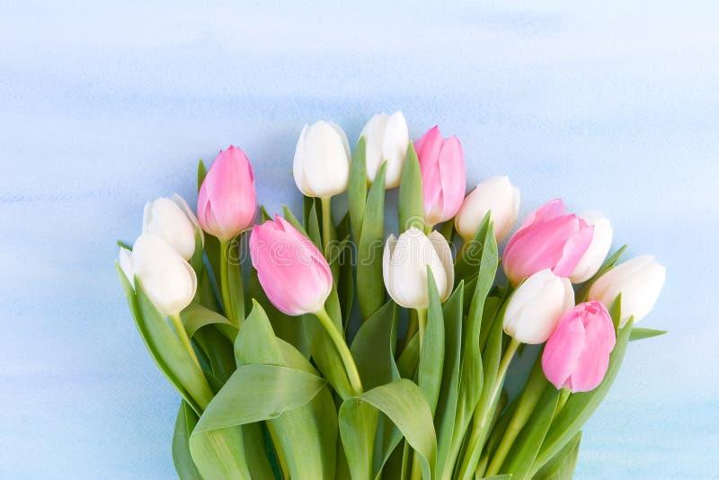 tła błękitny pastelowa tulipanów akwarela obraz stock