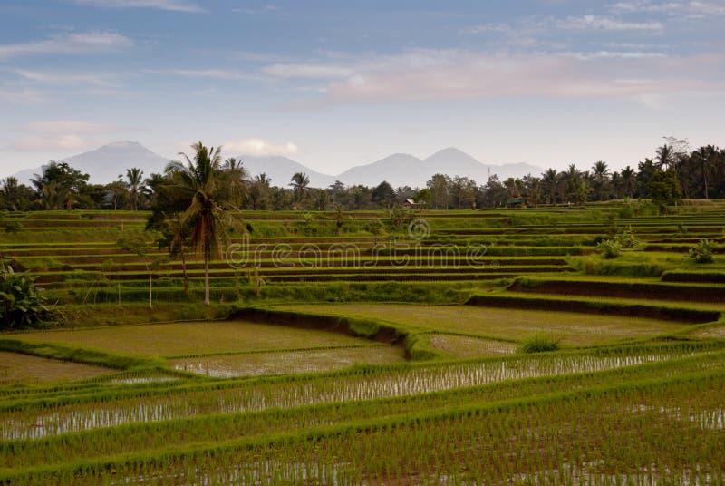 tła Bali śródpolni ryżowi vulcanos zdjęcia stock