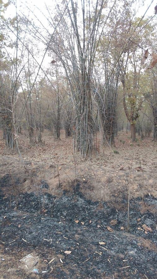 tła bambusa zakończenia naturalni drzewa naturalny zdjęcia stock