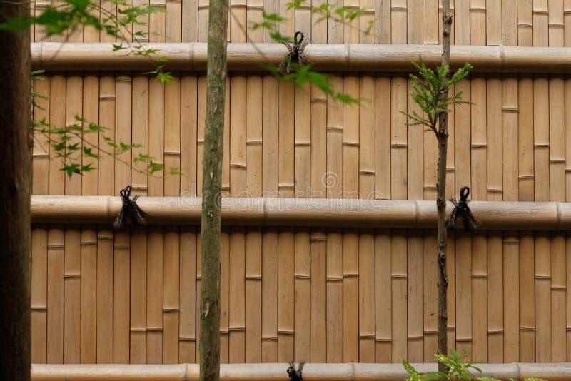 tła bambusowa use ściana obrazy royalty free