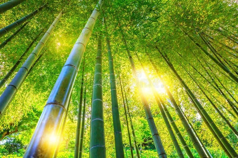 tła bambusowy pojęcia lasu zen obrazy stock