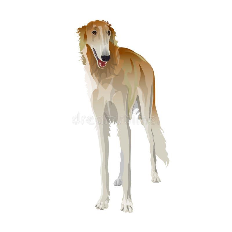 tła borzoi zakończenia psiej głowy portreta profilu rosjanin w górę biel royalty ilustracja