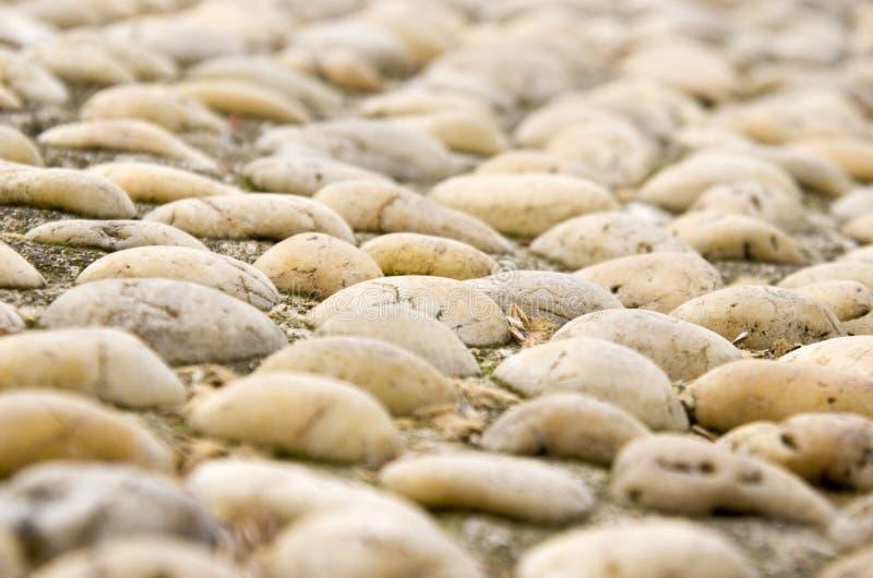 Tła cobble kamień