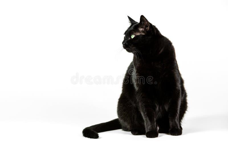 tła czarny kota biel zdjęcia stock