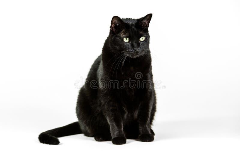 tła czarny kota biel obrazy royalty free