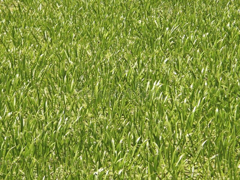 tła dof trawy zieleni płycizna obrazy royalty free