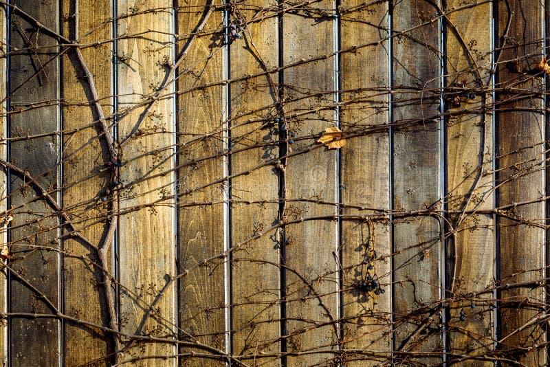 Tła drewniany ogrodzenie zdjęcia royalty free
