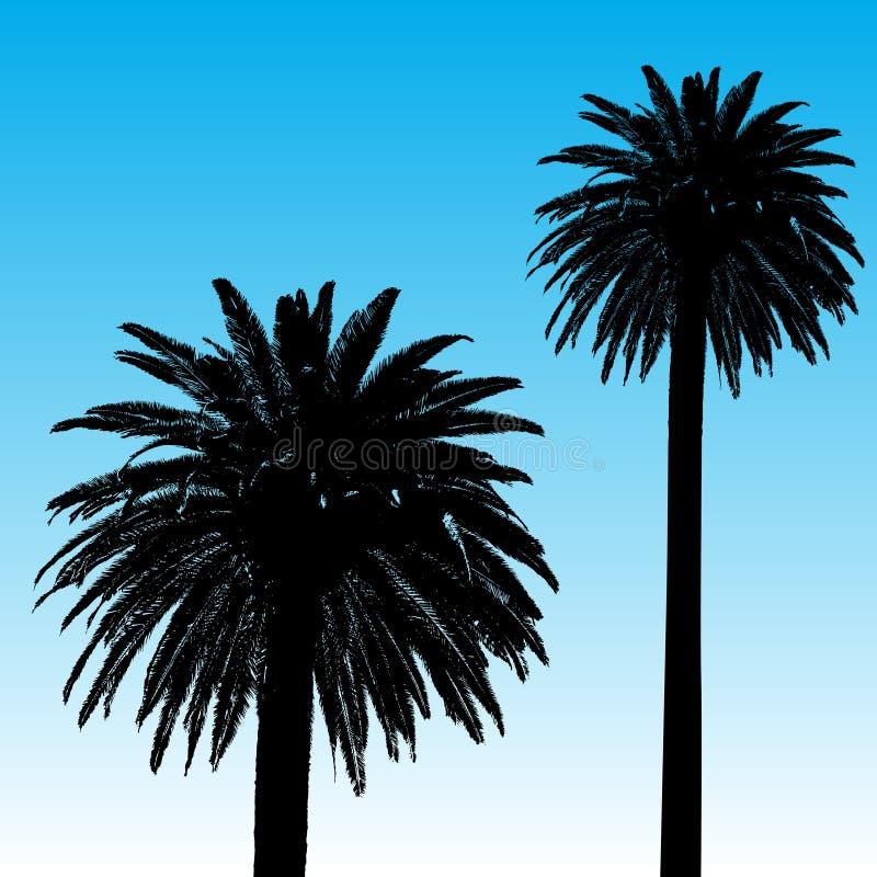 tła drzewko palmowe ilustracji