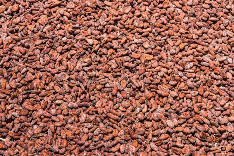 tła fasoli kakaowy ilustraci wektoru biel zdjęcie royalty free