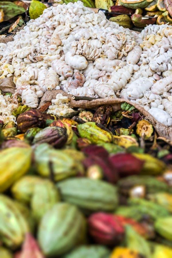 tła fasoli kakaowy ilustraci wektoru biel obrazy stock