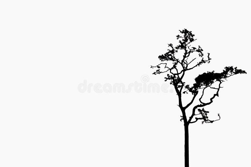 tła gałąź odosobniony drzewny biel obraz stock