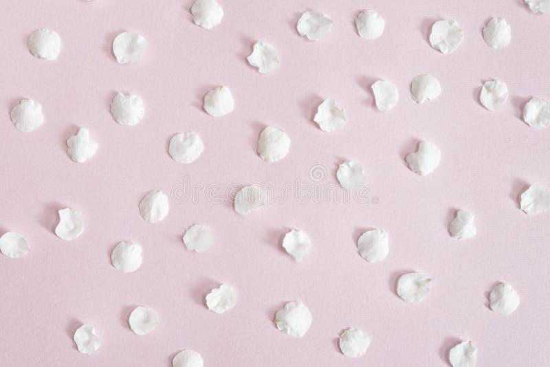 Tła i tekstury Biali morelowi płatki na różowym tle Zakończenie zdjęcie stock
