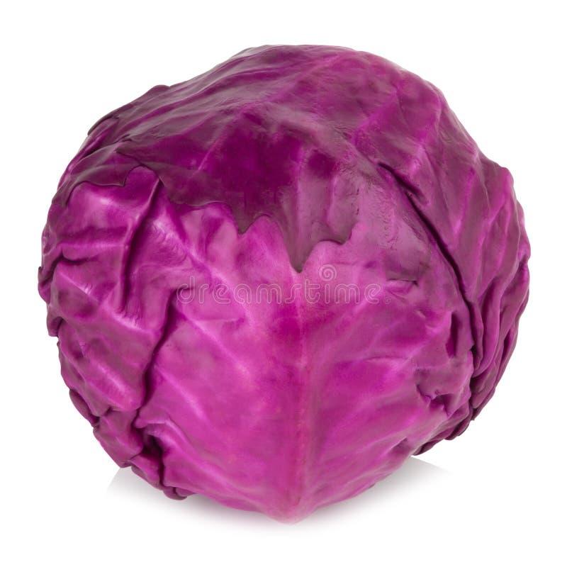 tła kapusty odosobniony purpurowy biel zdjęcie stock
