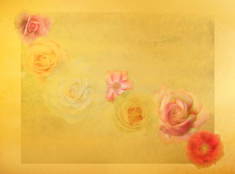 tła kolorowe fasonować grunge stare róże obraz royalty free
