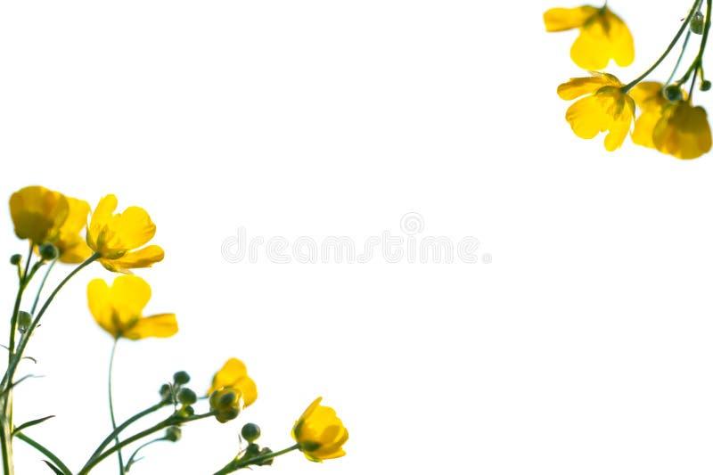 tła kwiatu wiosna lato tematu kolor żółty Horyzontalny, bo zdjęcie stock